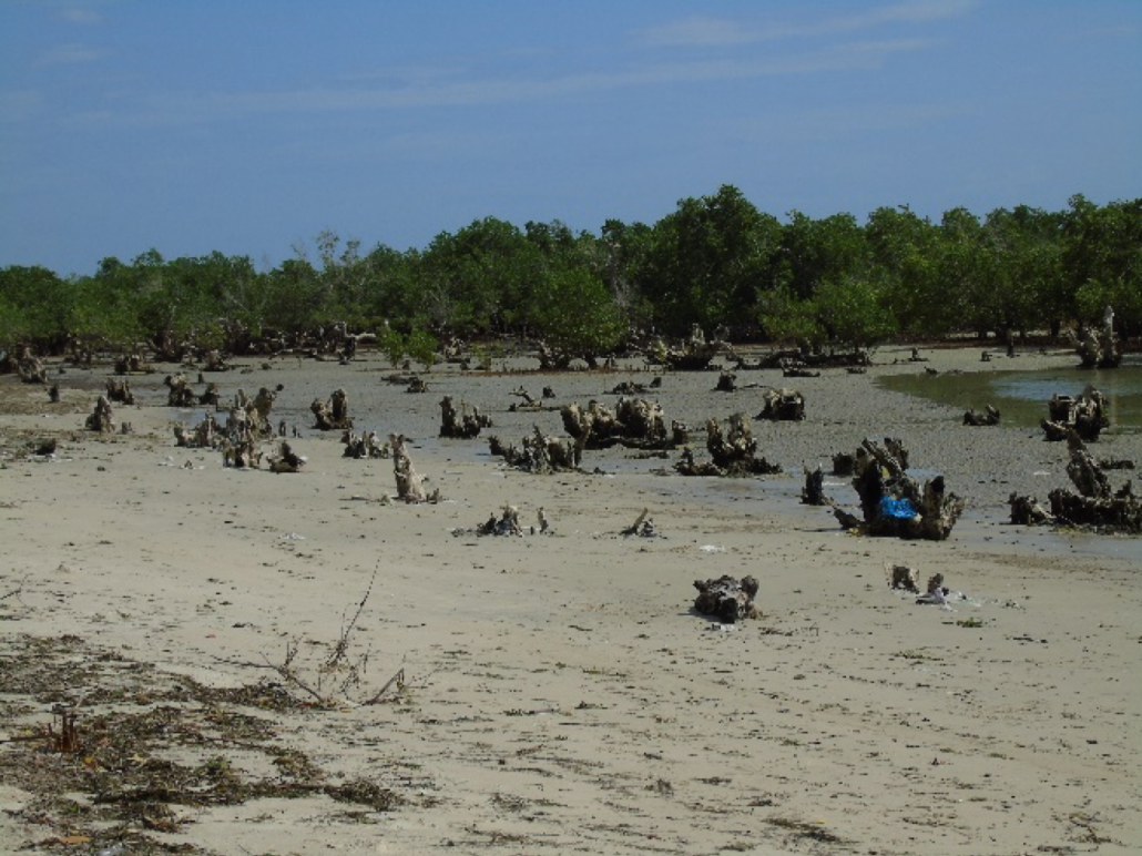 Trash littering Bagamoyo mangroves in September 2017.