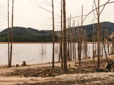 Rising Attacks on Environmental Defenders Threaten Human Rights Goals Globally